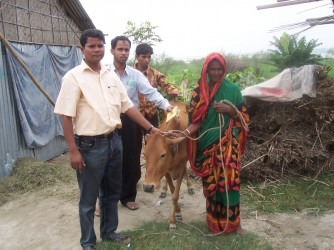 Agriculture Project- Cow