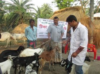 Livestock Health Care